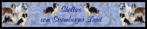 Shelties vom Stomberger Land